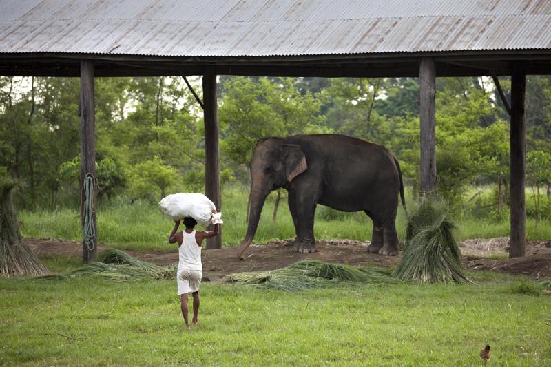 éléphant gouvernemental
