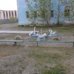 Jeux dans une cour d'école à Ölgiy