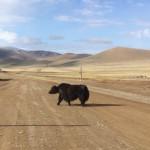 Enfin la Mongolie